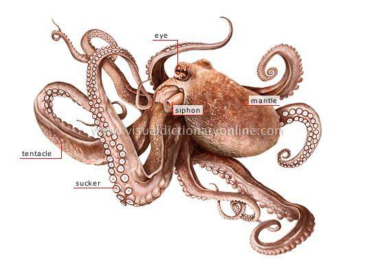 Octopus Tattoo Drawings | Lightink´s program för återvinning av förbrukningsmaterial för ...