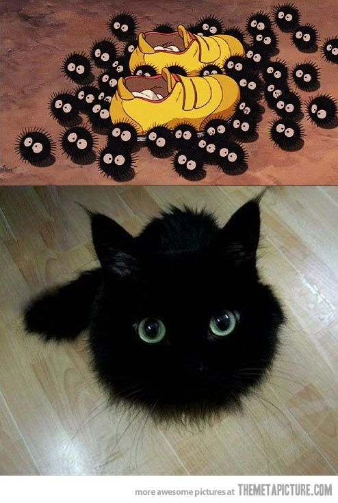 I've never wanted anything so much in my life! Soot Balls! OMG they were my favorite part of Spirited Away!!