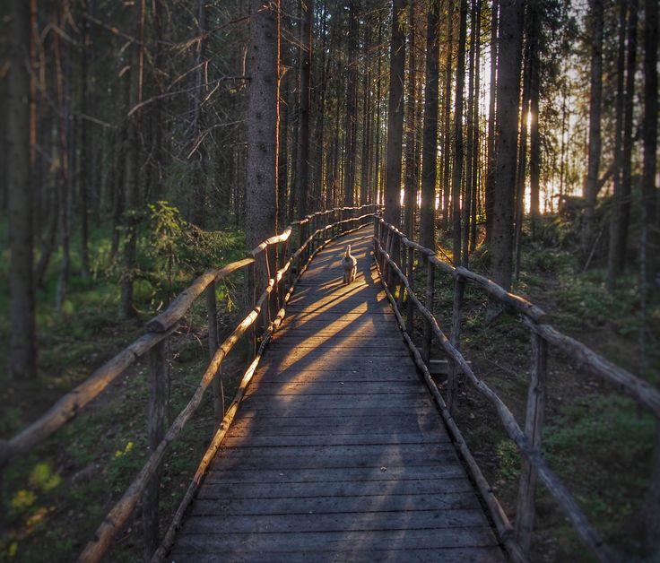 Early morning on Lapakisto. by Ari Saloranta / 500px