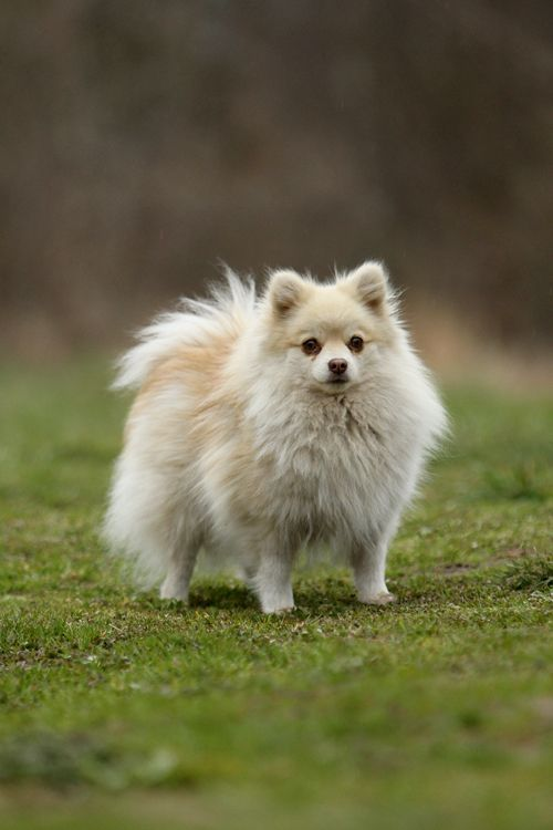 Nubia is a small German Spitz. She has lived a comfortable life, silver food dishes, diamond collar, you get the image. But one day her owner abandons her on the side of the road where she meets Osiris who takes her to the pack. She has a hard time adjusting to living as a stray and it only makes it harder for the pack to carry on with the very serious task at hand.