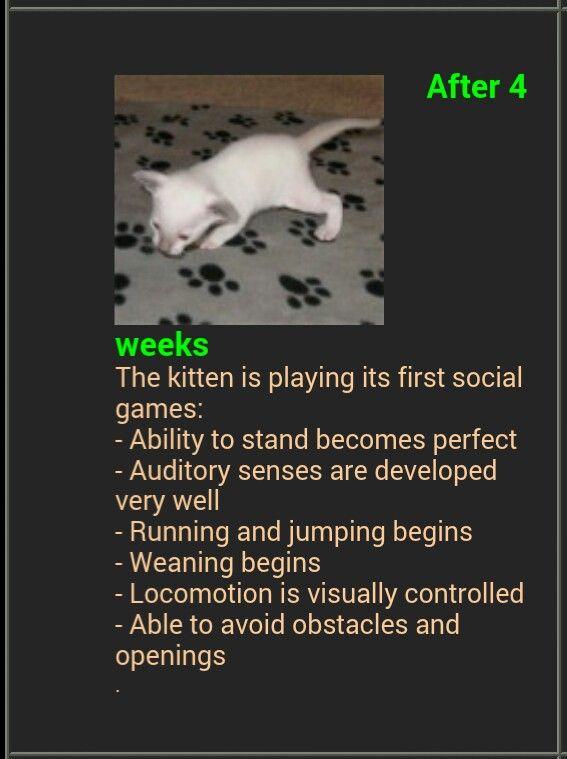 highlander cat breeders