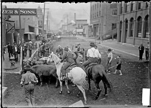 Men on horseback herding cattle during the 1904 Stockyards Strike. The stockyards owned by the Union Stock Yard & Transit Company were located in the New City community area of Chicago, IL. Photograph by Chicago Daily News, Inc.