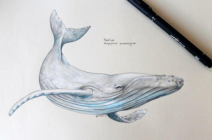 20+ beste ideeën over Humpback whale tattoo op Pinterest ...