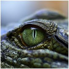 reptile eyes - Google Search