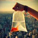 Lovely photo taken by *oO-Rein-Oo: Big Cities, Buckets Lists, The Edging, Dreams Come True, Mr. Big, Goldfish, World Photography, Pictures Perfect, Animal