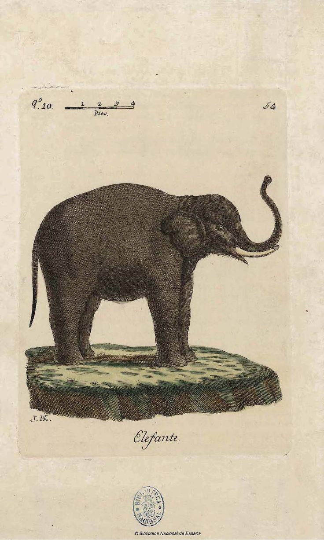 Elefante - Coleccion de laminas que representan los animales y monstruos del Real Gabinete de Historia Natural de Madrid, con una descripcion individual de cada uno. Bru de Ramón, Juan Bautista — Libro — 1784-1786