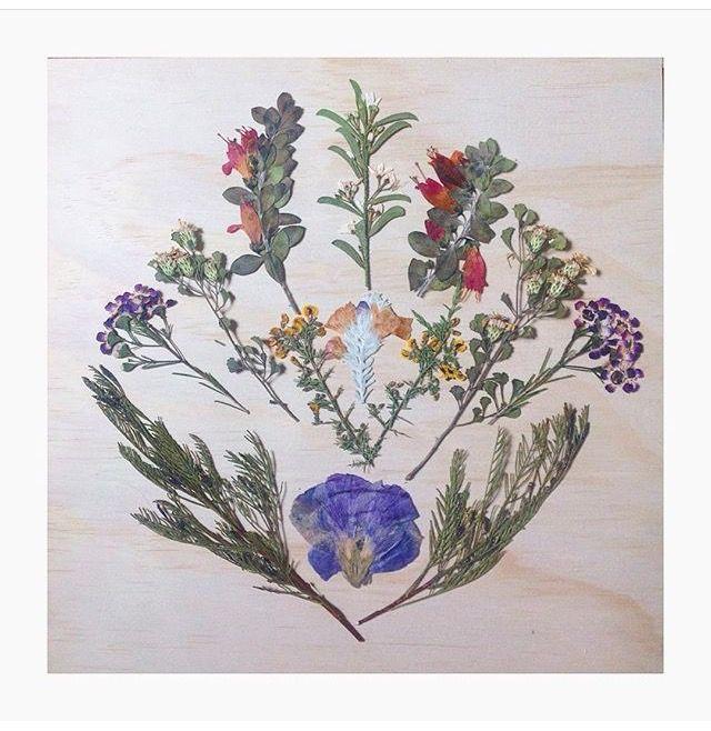 Australian native flowers pressed on woodern canvas.   #woodern #australiannativeflowers #pressedflowers #flowerart #ecofriendly