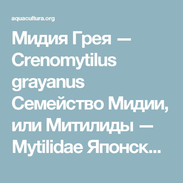 Мидия Грея — Crenomytilus grayanus Семейство Мидии, или Митилиды — Mytilidae Японское и Охотское моря, Южно-Курильское мелководье, Тихоокеанское побережье о-ва Хоккайдо и севера о-ва Хонсю.  Морские воды. Встречается на глубинах до 60 м, но в основном не глубже 20 м. Предпочитает участки дна со скалисто-каменистыми, крупнокаменистыми, галечными грунтами. В заливе Петра Великого (Японское море) наиболее благоприятная температура воды для роста и развития мидий 8–20° С, соленость – 32–34 ‰…