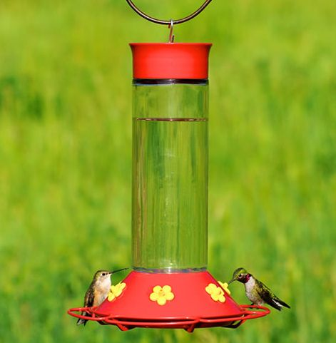Hummingbird Safety Predators