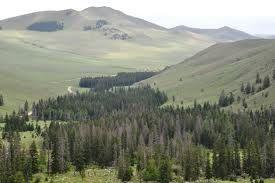 En mi último post sobre Mongolia quería hablar un poco sobre la taiga, el también llamado bosque boreal de conífera que es la mayor biomasa del planeta.