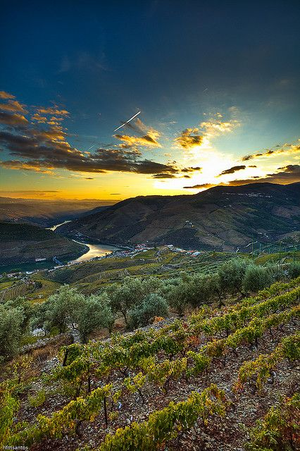 Douro #Portugal IV by hfmsantos, via Flickr