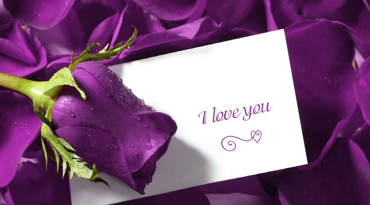 Use one of these cute valentine quotes to express your emotion with a bunch of red roses. Today I am going to share with you about cute valentine quotes for you.