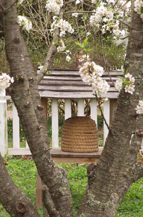 Весна в Колониальный Вильямсбург наполнен ландшафтов и садов красочных цветущие луковицы с, кустарников, многолетних растений, однолетних лоз, и трав.  Прогуляйтесь по улицам, чтобы посмотреть достопримечательности или принять одно из экскурсий, изложенных в www.dailypress.com/digginblog~~pobj .: