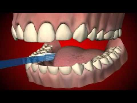 How to brush your teeth? Learn in 4 simple steps! - YouTube