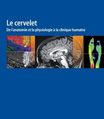 Le Cervelet:  De L'Anatomie Et La Physiologie À La Clinique Humaine PDF