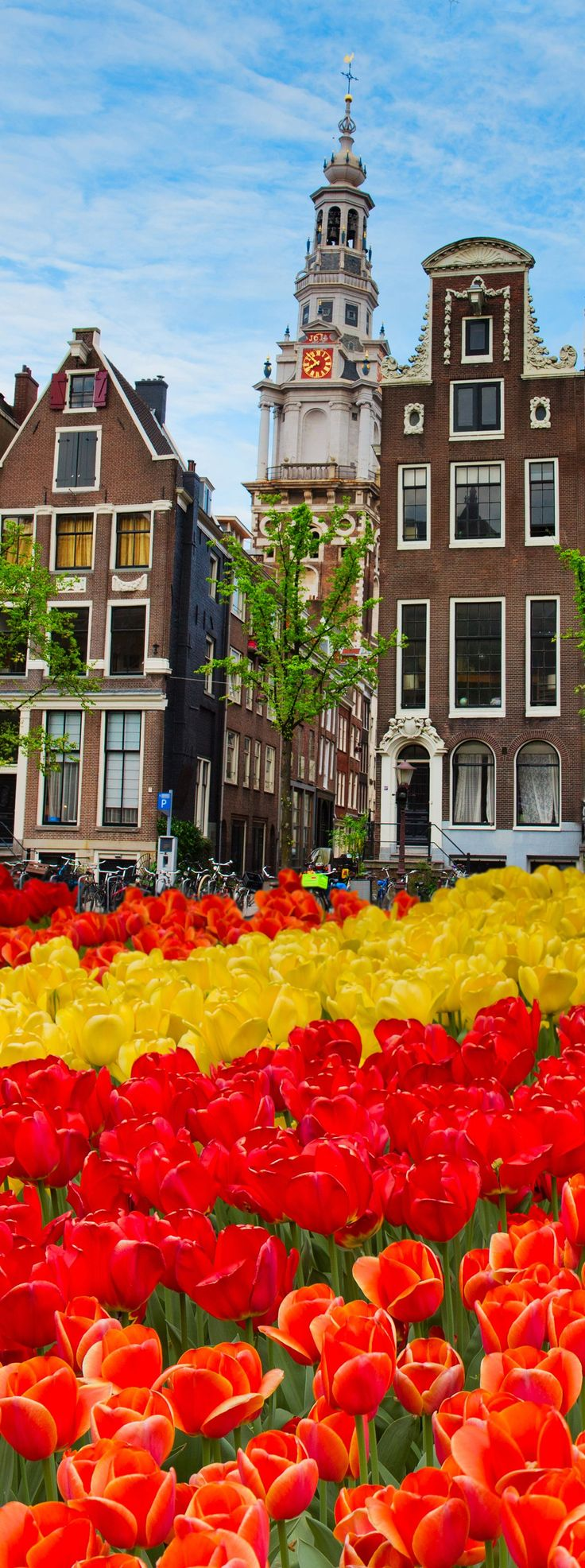 Tulips and frontages of old buildings in Amsterdam, Netherlands