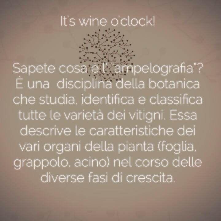 """Sapete cosa è l' """"ampelografia""""? #wineoclock #vino #winelovers #wine #winetime San Marzano Cantine"""