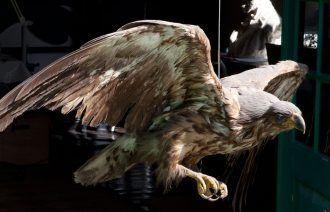 Sea Eagle | Drachmanns Hus | Skagens Kunstmuseer | Art Museums of Skagen