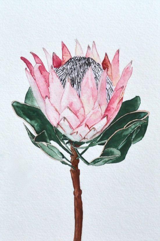 King Protea (watercolor) by Eentrok