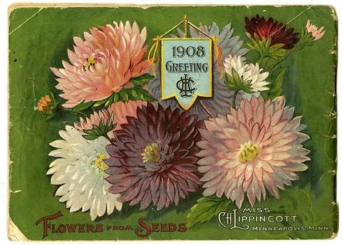 "The back cover of Carrie Lippincott's 1908 catalog shows a banner with her initials and an abundance of asters. Carrie Lippincott, the self-proclaimed ""pioneer seedswoman"" and ""first woman in the flower seed industry"" established her mail-order flower seed business in Minneapolis in 1891. Sending out smaller 5 inch by 7 inch catalogs with colorful covers, her business was aimed at women customers."