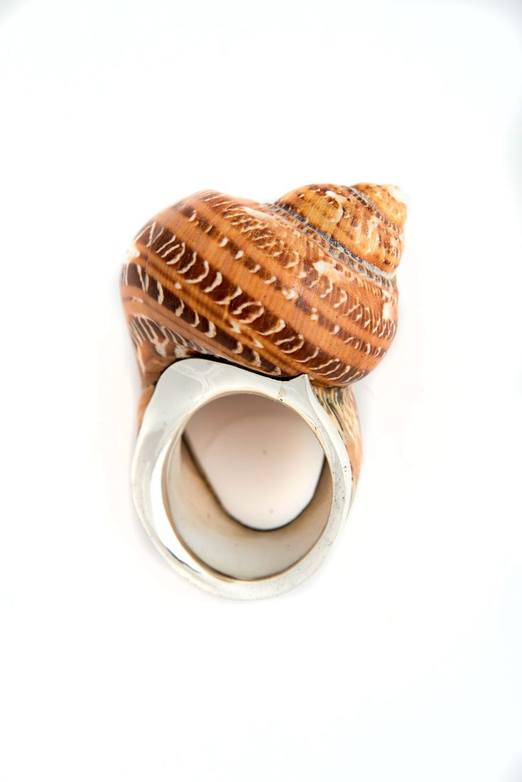 Conch Shell and Silver Napkin Rings (pair)