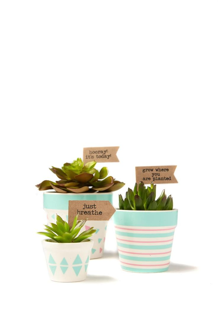 Liven up any space with these ready made potted succulents! <br> Each set includes 3 different sized pots each with their own print and succulent, and 8 flags to decorate your pots with. <br> Dimensions: 10cmH 8cmH and 4.5cmH <br/>