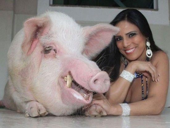 Si chiama Alice Alves e vive a Rio. Oltre ad esercitare la professione della veterinaria si esibisce spesso anche come ballerina di samba. La donna, 28enne, oltre che con il grosso maiale condivide la sua abitazione anche con un gatto e una tartaruga