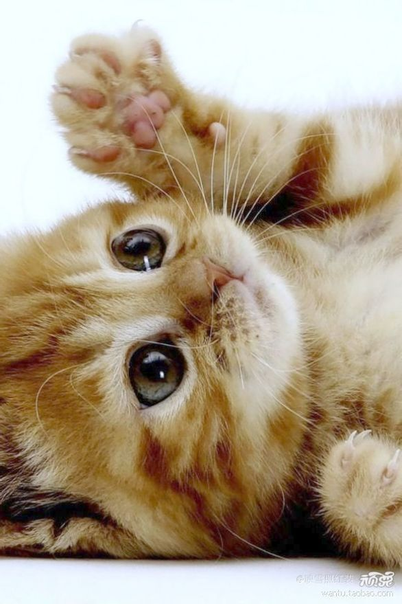 Fantastic Cute Cats For Sale Philippines D Kittens Cutest Cute Animals Cute Cats