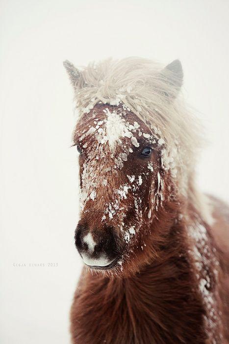 86 besten islandpferde bilder auf pinterest islandpferde pferde und sch ne pferde - Gartenzaun fur hunde ...