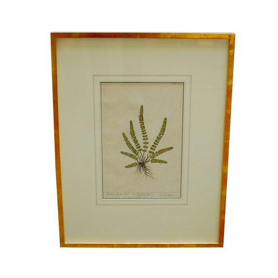 Framed English Maidenhair Botanical Plate by ErinLaneEstate