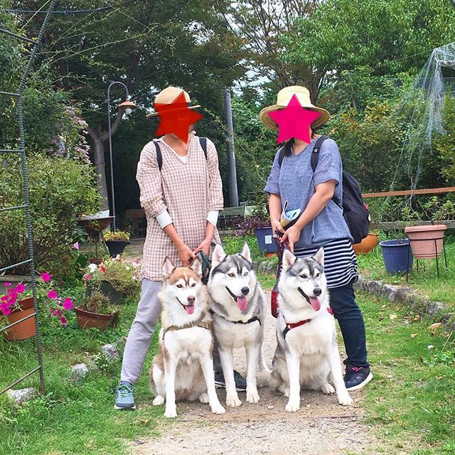 初めて遊びに来てくれたお客様です。 ハスキー犬3匹! とっても綺麗なワンちゃん達でした。 また遊びに来て下さいね。 ※ ※ #リバーサイド園ヨリタ #新城 #新城市 #ドッグラン #川遊び #愛犬 #大型犬 #ハスキー #ハスキー犬 #自然 #緑