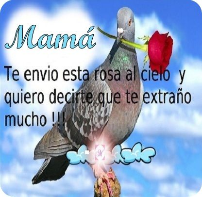 Imagen+De+Una+Paloma+Para+Enviar+Un+Mensaje+A+Una+Madre+En+El+Cielo
