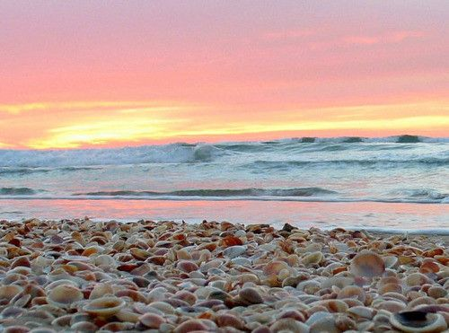 Beach Sand Shells Sunset Pink Orange Horizon Waves