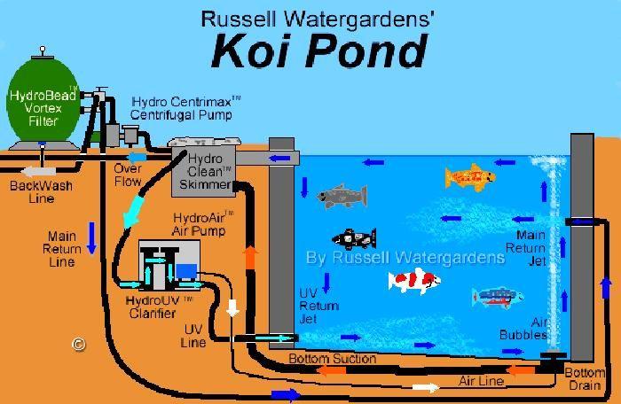 Pond Bottom Drain Diagram Related Keywords Suggestions Pond Koi Pond Design Fish Ponds Backyard Koi Fish Pond