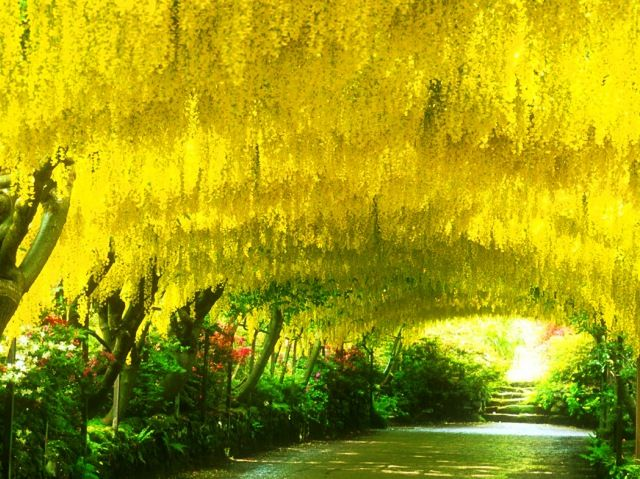 Pretty  Best Images About Statetly Gardens On Pinterest  Gardens  With Licious The Laburnum Arch Bodnant Gardens With Astonishing Rancho Santa Botanic Garden Also Grannies Garden In Addition Hatton Garden Wedding Bands And Country Gardening As Well As Fountain Gardens Additionally Clockhouse Garden Centre From Pinterestcom With   Licious  Best Images About Statetly Gardens On Pinterest  Gardens  With Astonishing The Laburnum Arch Bodnant Gardens And Pretty Rancho Santa Botanic Garden Also Grannies Garden In Addition Hatton Garden Wedding Bands From Pinterestcom
