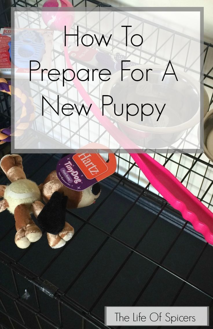 How To Prepare For A New Puppy - The Life Of Spicers