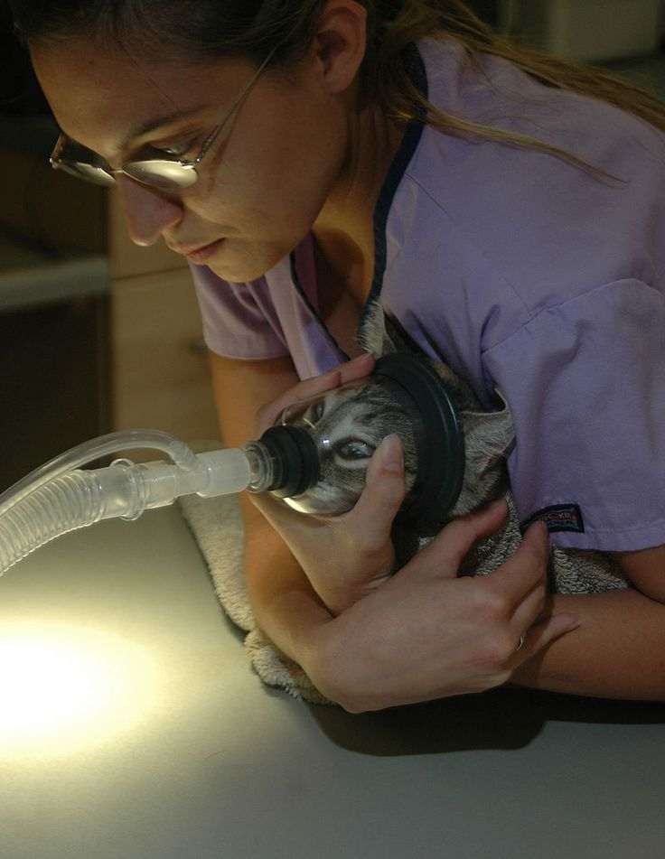 What is Veterinary anesthesia