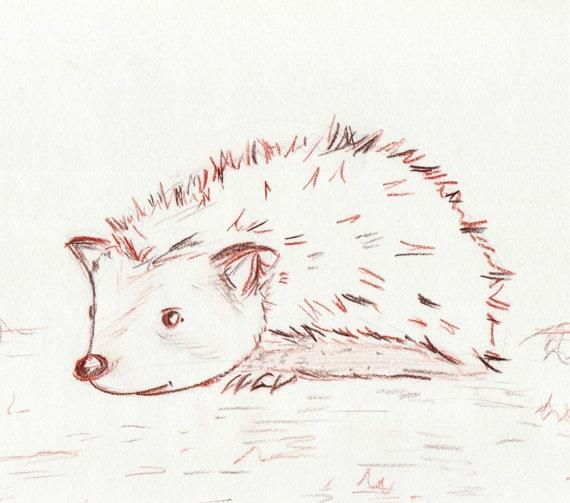 HEDGEHOG original drawing animal portrait by HeyElisabeth, $10.00