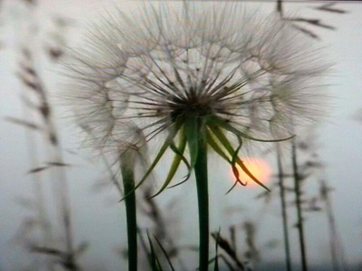 Wish....
