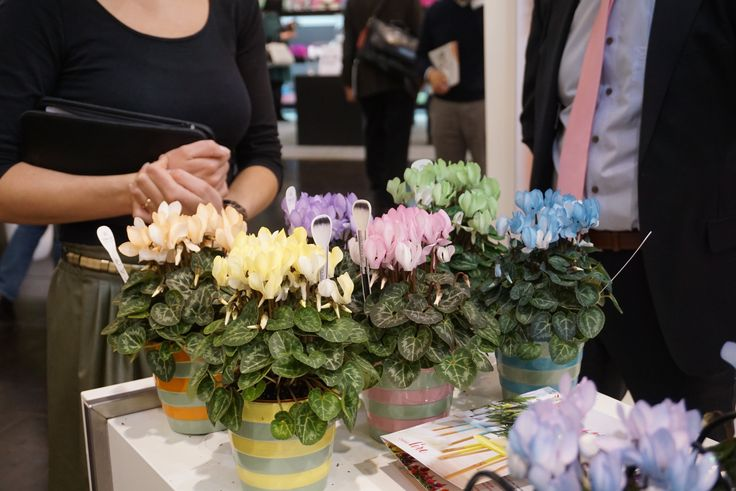 Marketing to people who don't usually buy plants.  Cyclamen in pastel shades to match a pastel eye shadow palette.  Called the Make-Upz(TM) series.