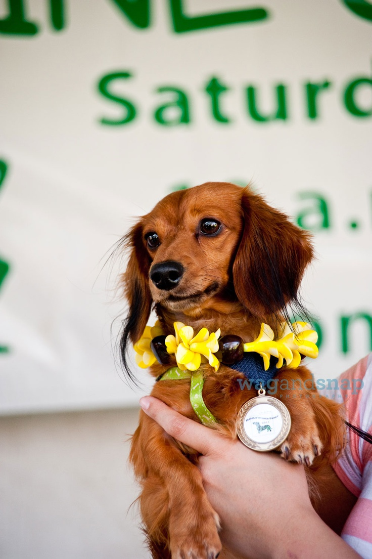 Más de 25 ideas fantásticas sobre Wiener Derby en Pinterest ...
