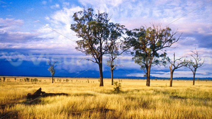 I love a sunburnt country, A land of sweeping plains, Of ragged mountain ranges, Of droughts and flooding rains. I love her far horizons, I love her jewel-sea, Her beauty and her terror – The wide brown land for me!