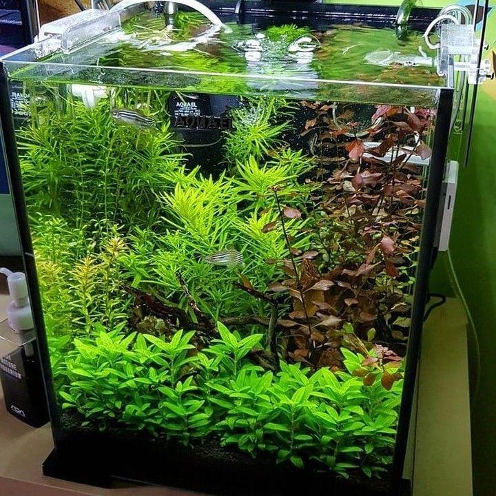 Aquascape Nano Tank Size 20x20 Cm Planted Aquarium Aquascape Nano Aquarium