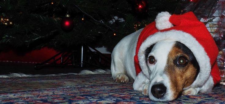 https://flic.kr/p/ChXgw3 | Waiting for Santa