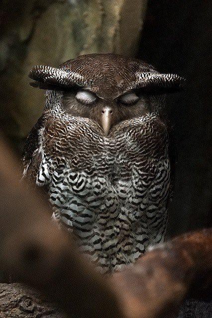 michaelisstilltalking:  spiritswildandfree:  wise owl  My feelings exactly.