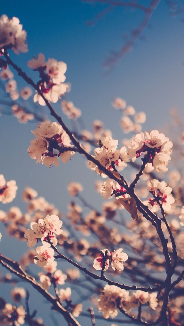 Rupesh Kumar Spring Wallpaper Pink Wallpaper Iphone Nature