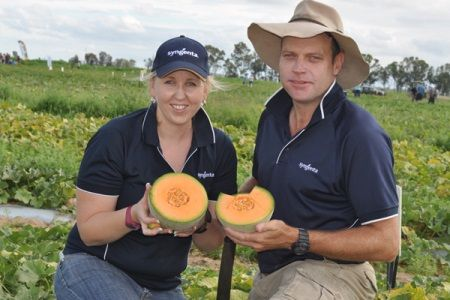 Sarah Iddles and Ged Sippel, Syngenta Crop Protection take a closer look at a rockmelon variety.