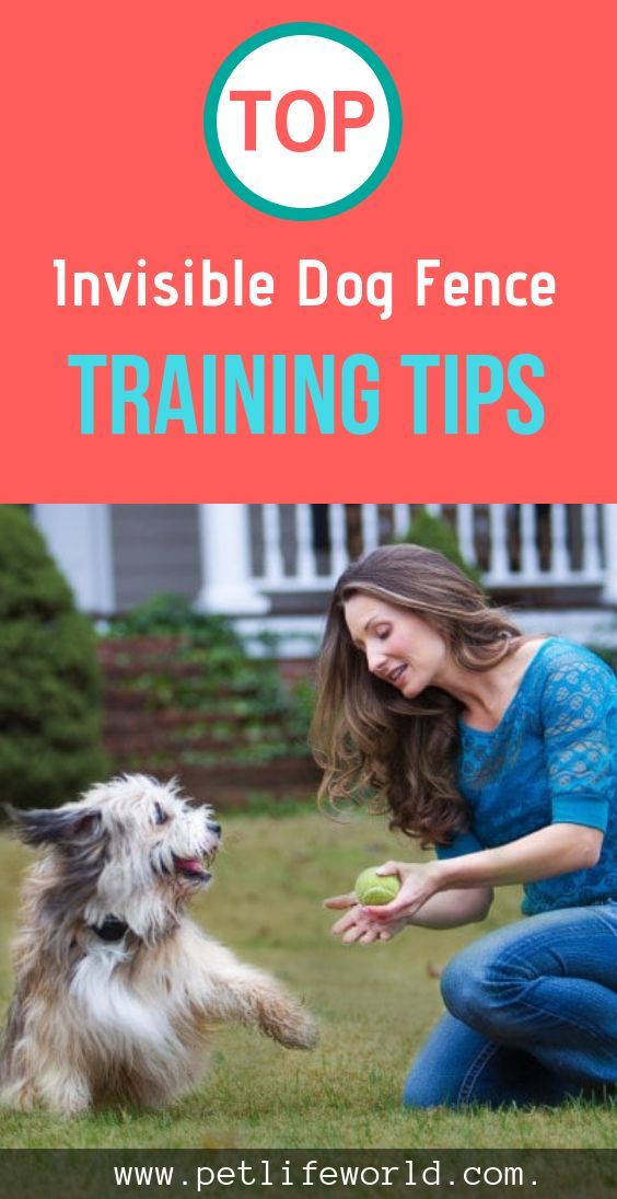 Training Dog To Stay Out Of Kitchen Invisible Fence Dogs Dog