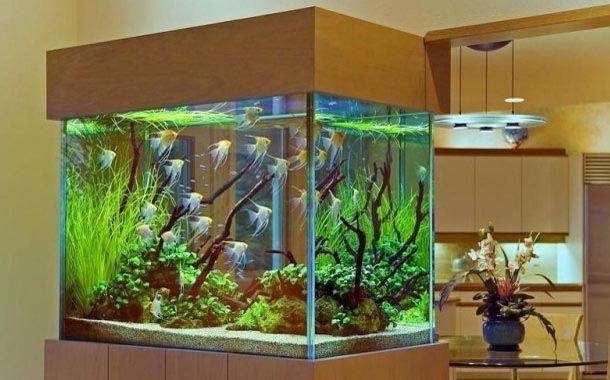 Como montar um aquário