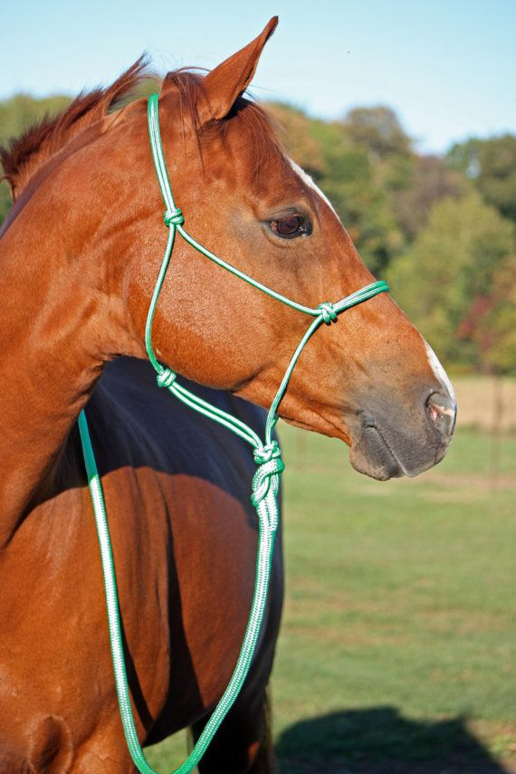 Mint green rope halter! You wont find a quality yacht rope halter in this color anywhere else!  Hand tied rope halter with 2 or 4 knot noseband. Made with 1/4 firm double braid yacht rope. Sizes - Horse, Cob, Oversize/Warmblood, Draft, Pony, Mini  These halters are made with tight knots that wont loosen up, and are comparable to rope halters from top clinicians.  Custom orders ship within 7-10 business days.